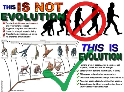 this_is_evolution2