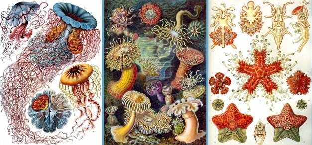 Láminas, Ernst Haeckel – Kunstformen der Natur