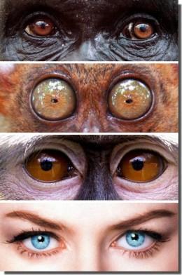 eye-whites400